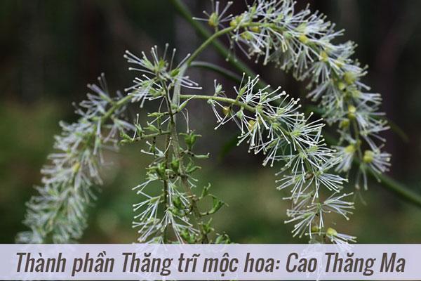 Thành phần của Thăng trĩ mộc hoa: Cao Thăng Ma